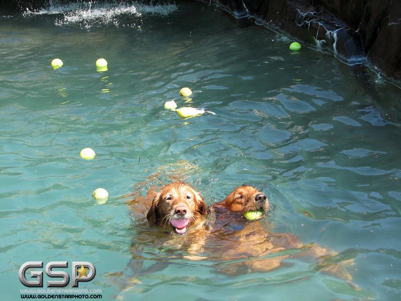 Golden Swim Party 077