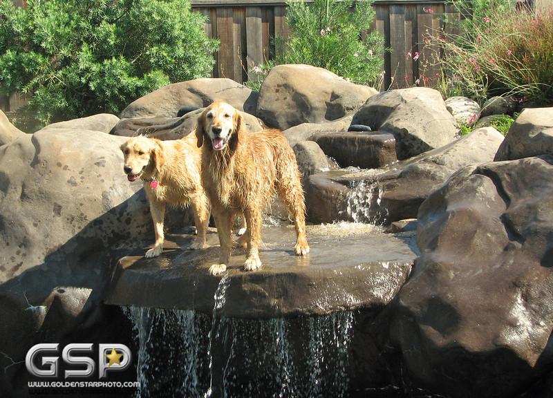 Golden Swim Party 012