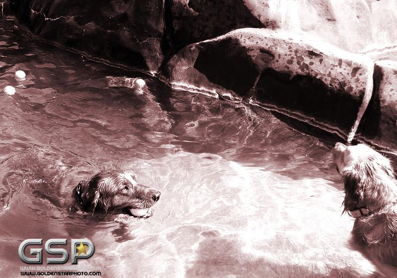 Golden Swim Party 061 copy