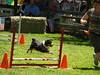 Pentathlon (2) 2011 148