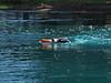 Pentathlon 2011 039