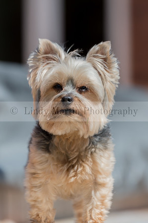 Pet photography by Lindy Martin  ©2017