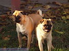Bobo and Roy 064