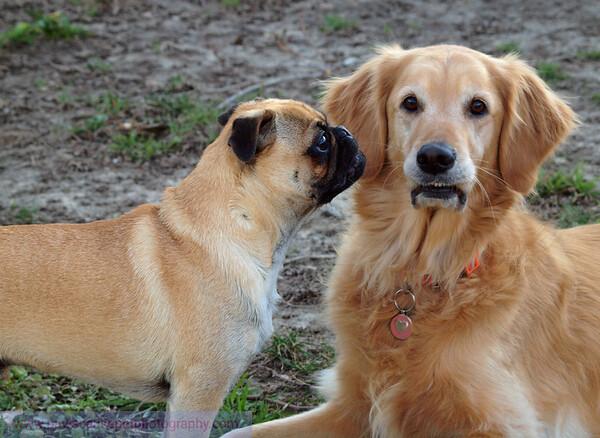 Bobo and Roy Feb 2012 050