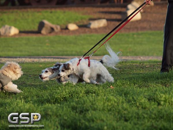 RRUFF Dog Park Reindeer Run 056
