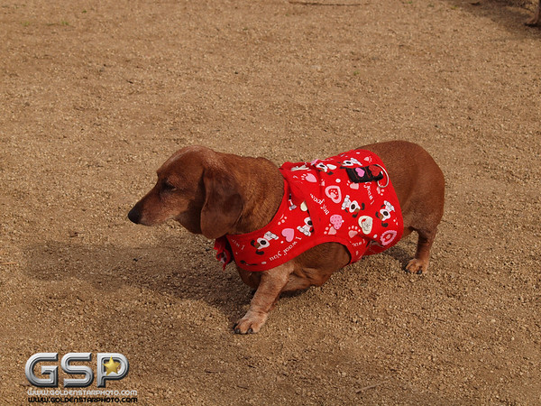RRUFF Dogs Day Out 031