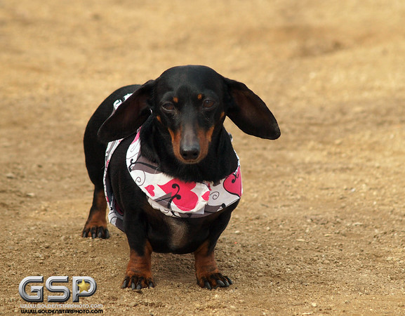 RRUFF Dogs Day Out 048