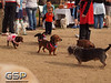 RRUFF Dogs Day Out 028