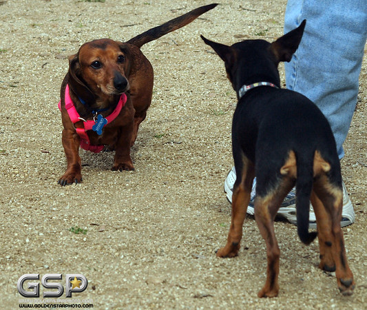 RRUFF Dogs Day Out 040