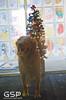 Santa Paws 12-20-09 112