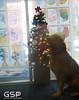 Santa Paws 12-20-09 094