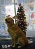 Santa Paws 12-20-09 079
