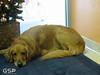 Santa Paws 12-20-09 064