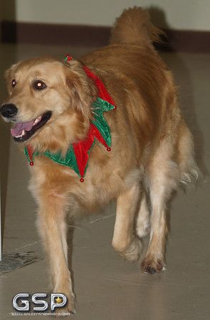 Santa Paws 12-20-09 254