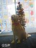 Santa Paws 12-20-09 123