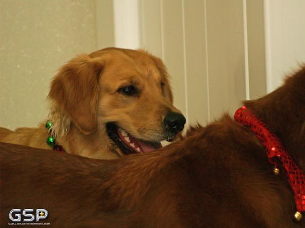 Santa Paws 12-20-09 224
