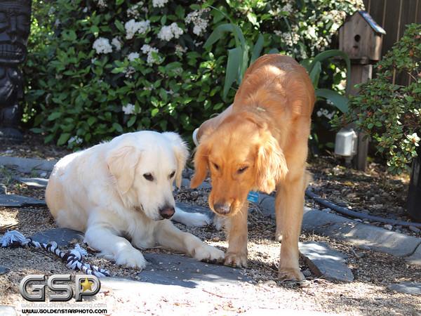 Simon and Lexie 159