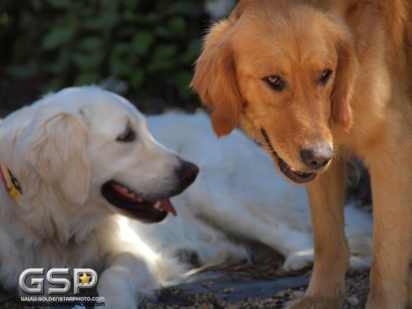 Simon and Lexie 183