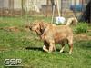 Spring Fling March 2010 110