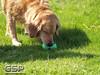 Spring Fling March 2010 174