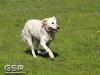 Spring Fling March 2010 122