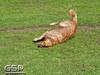 Spring Fling March 2010 119