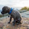 Pet Photography - JayJay