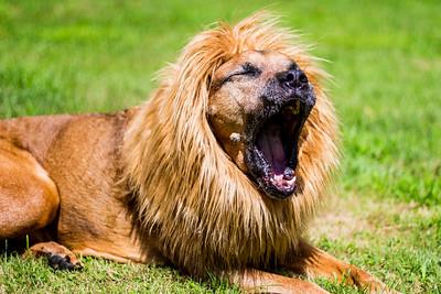 Lions Roar, Max