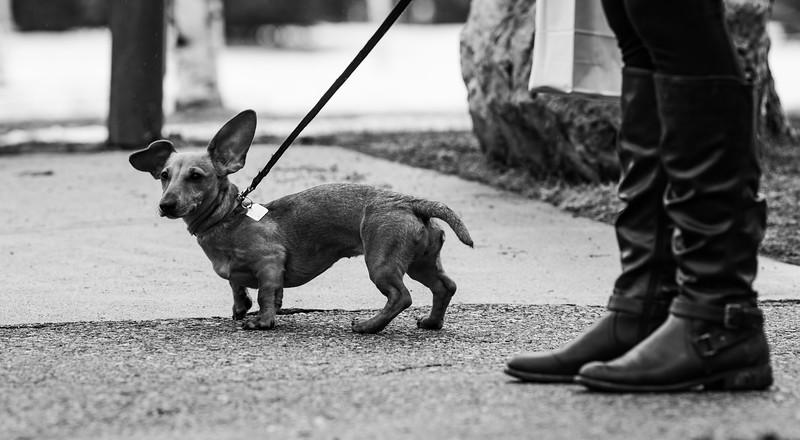 Banff Park- Pets Walking Our Dog