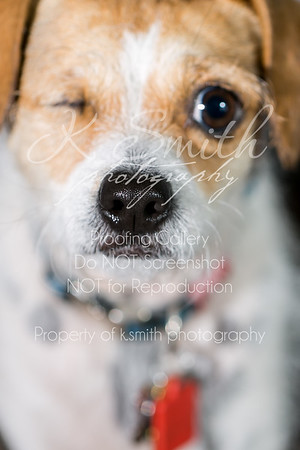 Annie The Dog | Folsom Pet Photography | April 2016