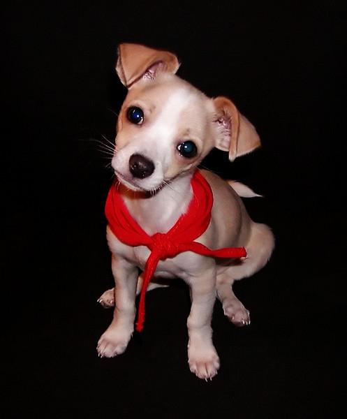 Tico Puppy