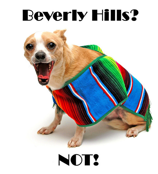 Beverly Hills?<br /> NOT!