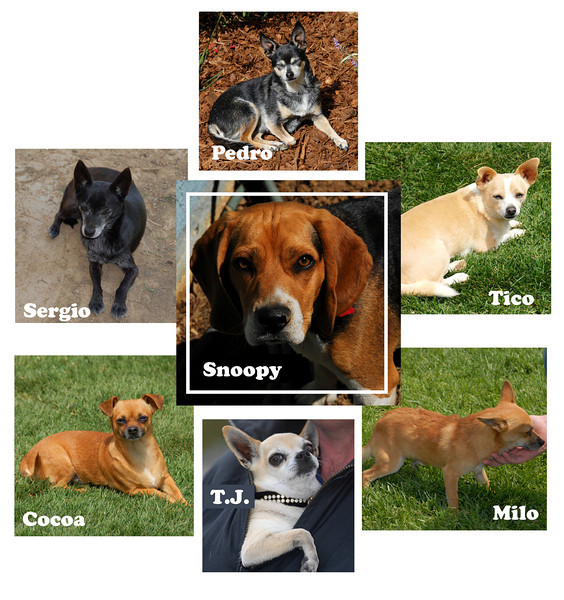 The Tico Puppy Family<br /> A family collage of your furry family.