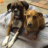 Deacon, left, and Sampson<br /> Submitted by Jennifer Olson