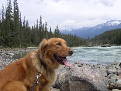 Angus at Athabasca Falls, Jasper.