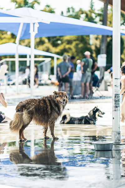 Dogs cooled off on the final day of swim season at City Park Waterpark located in Manhattan KS. City Park hosted a pet poolooza on August 21. (Dylan Connell   Collegian Media Group)