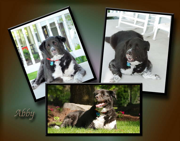 Abby-Collage 1 JEPG
