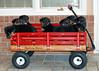Groff-Puppies 115_E_57