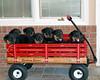 Groff-Puppies 126_E 8X10