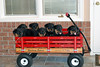 Groff-Puppies 126_E