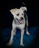 Pets_8736 E NEWT 810