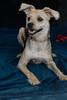 Pets_8771 EE NEWT