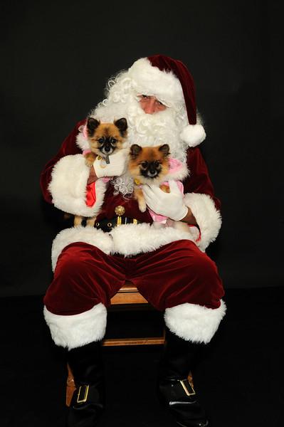 Santa_7851 snavely_buttercup foxy