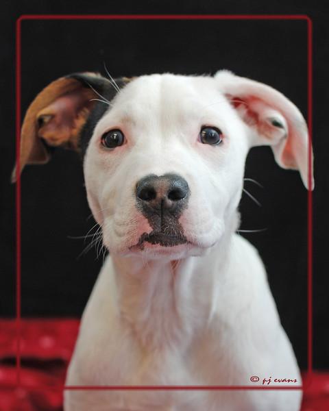 Bella Pet Portraits 02 01 08 045 E (3)