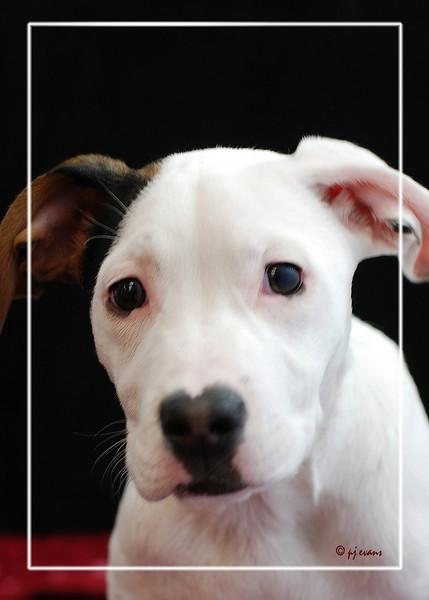 Bella Pet Portraits 02 01 08 045 E (1)