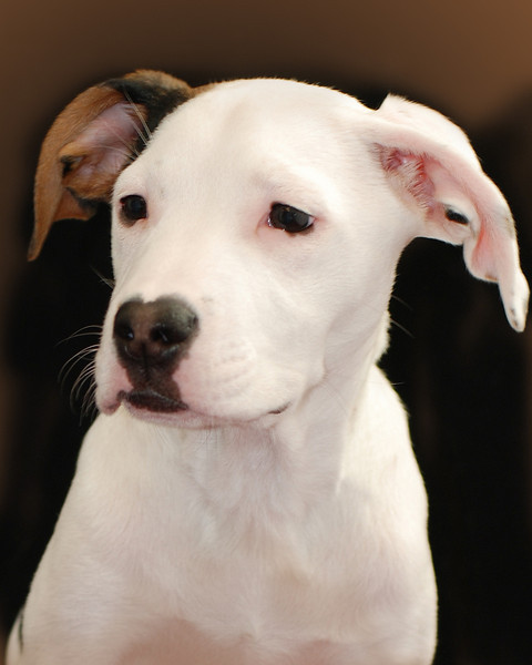 Bella Pet Portraits 02 01 08 045 E (11)
