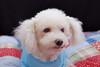 Hilt and Ruhl GiGi and Joey Pet Portraits 02 01 08 (3)