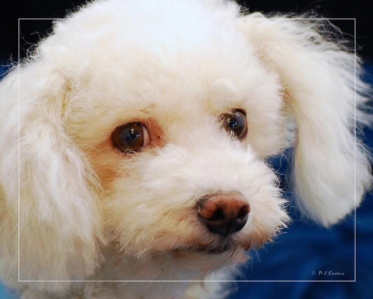 Hilt and Ruhl GiGi and Joey Pet Portraits 02 01 08 (2)