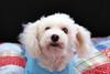 Hilt and Ruhl GiGi and Joey Pet Portraits 02 01 08 (5)