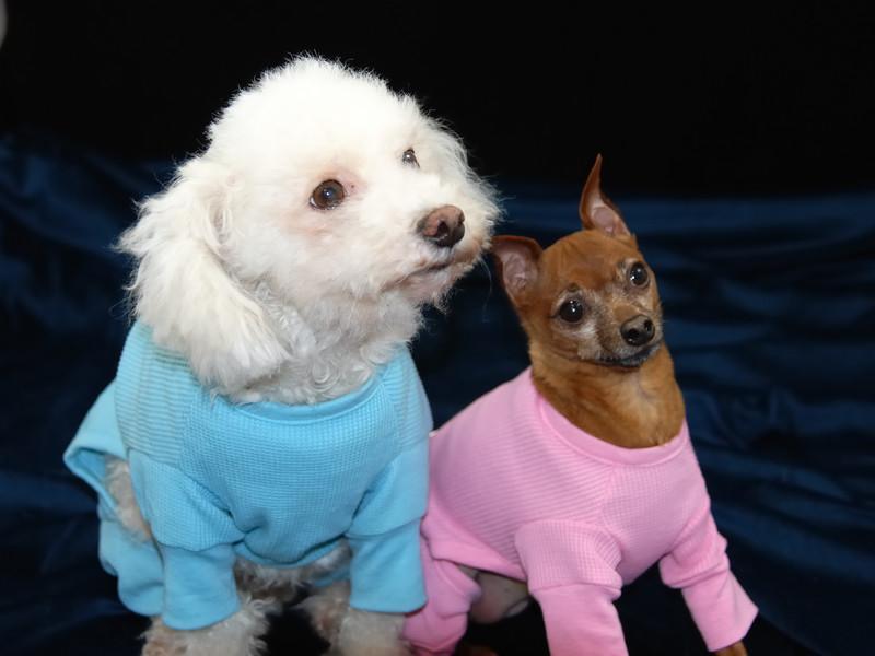 Hilt and Ruhl GiGi and Joey Pet Portraits 02 01 08 (12)
